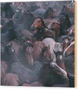 Wild Horses In A Pen Wood Print