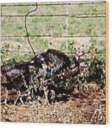 Wild Turkeys Wood Print by Thea Wolff