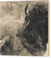 Wild West Bison Wood Print
