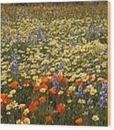 Wildflower Wonderland 9 Wood Print