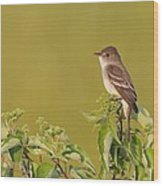 Willow Flycatcher Wood Print