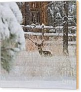 Winter Doe Wood Print