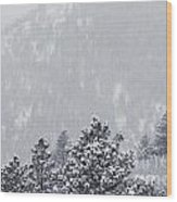 Winter In Pike National Forest Wood Print