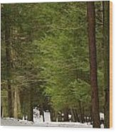 Winter Path Wood Print by Andrea Dale