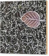 Winter With Frosted Leaf On Frozen Grass Wood Print