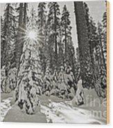 Winter Wonderland - Badger Pass In Yosemite National Park Wood Print