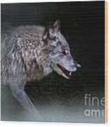 Wolf On The Prowl Wood Print