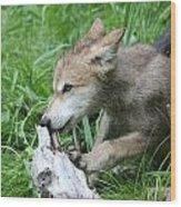 Wolf Pup Wood Print