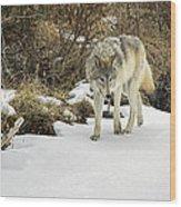 Wolf River Wood Print