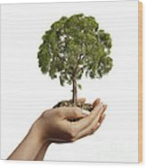 Womans Hands Holding Soil With A Tree Wood Print