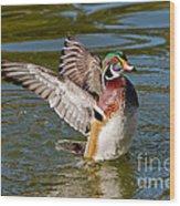 Wood Duck Drake Flapping Wings Wood Print