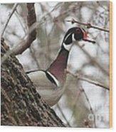 Wood Duck Wood Print