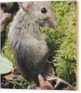 Wood Mouse Wood Print
