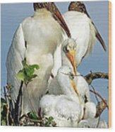 Wood Stork With Nestlings Wood Print