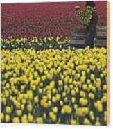Worker Carrying Tulips Wood Print