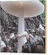 World Of Mushroom Wood Print