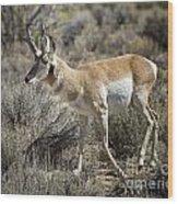 Wyoming Pronghorn Wood Print