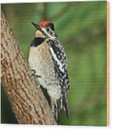 Yellow-bellied Sapsucker Wood Print