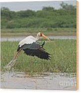 Yellow-billed Stork Mycteria Ibis Wood Print