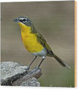 Yellow-breasted Chat Wood Print