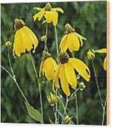 Yellow Cone Flowers Rudbeckia Wood Print