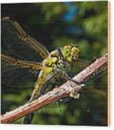 Yellow Dragon Wood Print