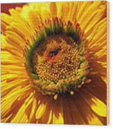 Yellow Flower Wood Print by Joyce Woodhouse