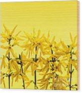 Yellow Forsythia Flowers Wood Print