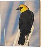 Yellow-headed Blackbird Wood Print