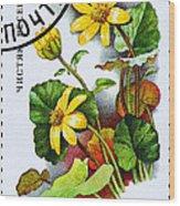 Yellow Lesser Celandine Ranunculus Ficaria Wood Print