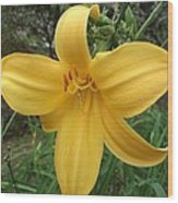 Yellow Lilly Flower Wood Print