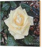 Yellow Rose At Dawn Wood Print