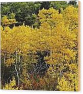 Yellow Trees  Wood Print