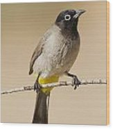 Yellow-vented Bulbul Pycnonotus Xanthopygos Wood Print