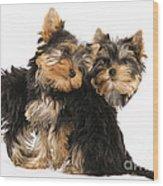 Yorkie Puppies Wood Print
