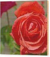 Young Red Rose After Rain Wood Print
