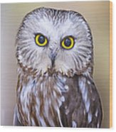 Young Saw-whet Owl Wood Print