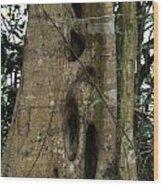 Yungabura Landscape Wood Print