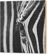 Zebra Eye Wood Print