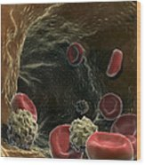 Blood Cells Wood Print