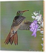 Buff-bellied Hummingbird Wood Print