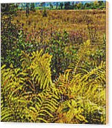 Cranberry Glades Botanical Area Wood Print