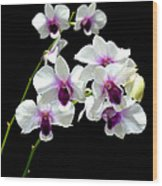 Dendrobium Orchid Wood Print