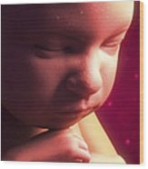 Developing Fetus Wood Print