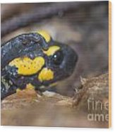 Fire Salamander Wood Print