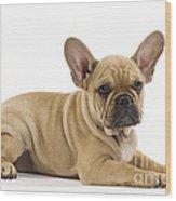 French Bulldog Puppy Wood Print