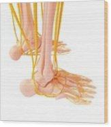 Human Foot Nervous System Wood Print