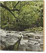 Jungle Stream Wood Print