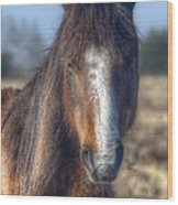 New Forest Pony Wood Print