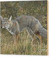 Patagonia Grey Fox Wood Print